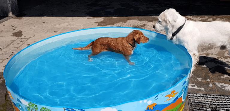 Gallery cani pernsione (1)