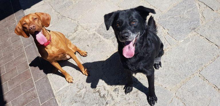 Gallery cani pernsione (6)
