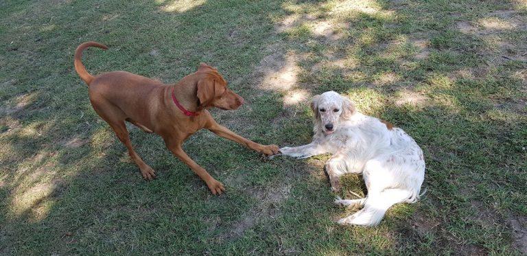 Gallery cani pernsione (7)
